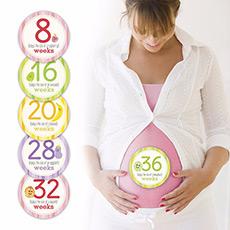 怀孕周期贴纸